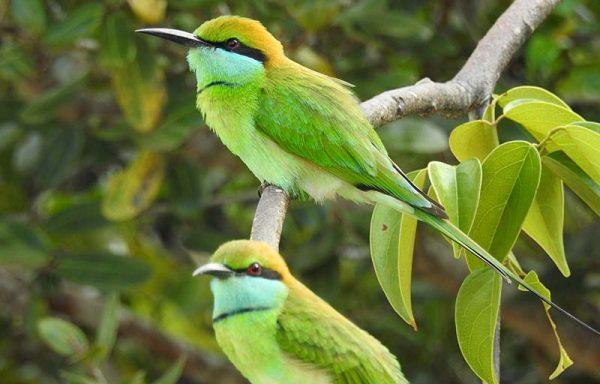 Wilpttu National park